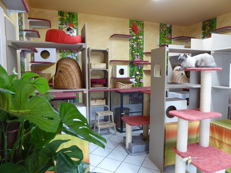 katzenpension reiss fragen antworten. Black Bedroom Furniture Sets. Home Design Ideas